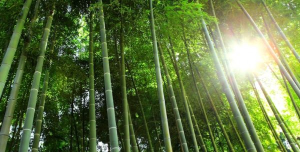 stop-being-bamboo-1